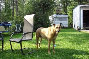WARNING: Watch For Campground Dogs That Display Aggressive Dog Behavior