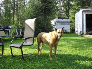 campground-dog-by-jon-a-ross.jpg