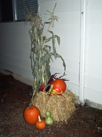 cornstalks-straw-and-pumpkins-by-matthew-and-tracie.jpg
