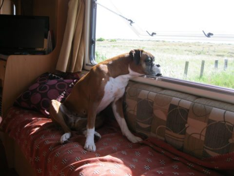 Full time RV living takes some planning -- especially if you bring your pet along!
