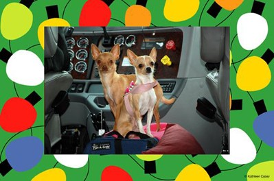 rv-dogs-christmas-holiday-photo-cards.jpg