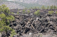 sunset-crater-lava-flow.jpg