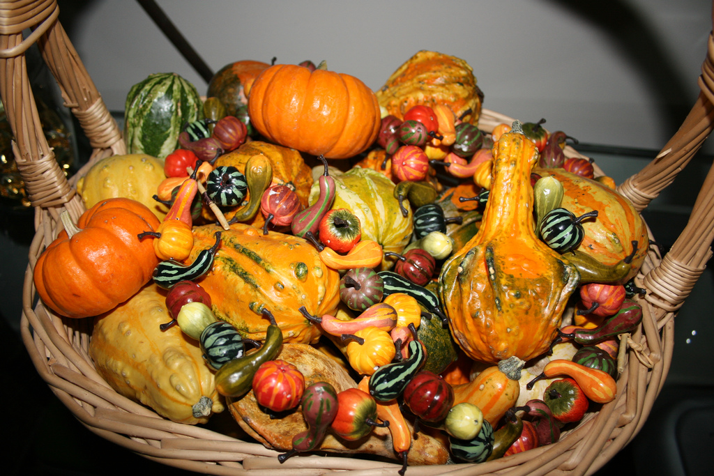 Autumn Gourds For Fall Decorations By Alasam